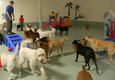 doggy care executive summary Paws provides you with two dog daycare business plans designed exclusively  also included is a start up financial summary that details what expenses you.