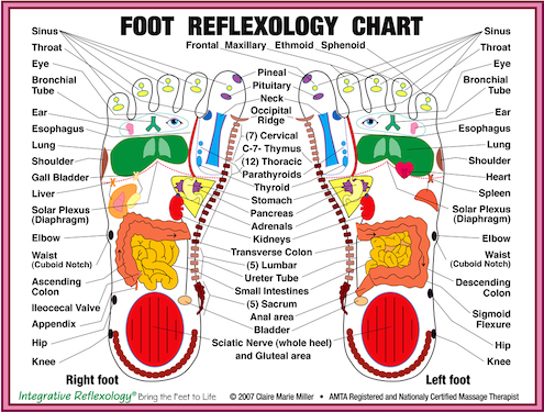 Download Reflexology Foot Chart | PDF wikiDownload
